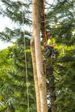 Arborist at work, closeup. Detail of an arborist at work with chainsaw and safety ropes, preparing to lop a very tall tree Royalty Free Stock Photo
