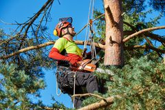 Arborist at work. Lumberjack with saw and harness climbing a tree Royalty Free Stock Photography