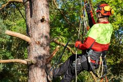 Arborist at work. Lumberjack with saw and harness climbing a tree Stock Photography
