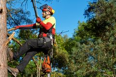 Arborist at work. Lumberjack with saw and harness climbing a tree Royalty Free Stock Images