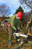 Arborist at work. Professional arborist doing end of year cleanup work, trimming and pruning trees Royalty Free Stock Photography