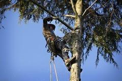 arboristcuttingtree arkivbild