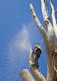 Arboriste au travail abattant le grand arbre Image stock