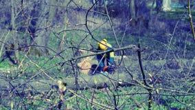 Arboristika. The worker on the tree Stock Photo