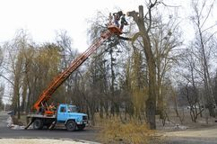 Arborists cut branches of a tree using truck-mounted lift stock photography