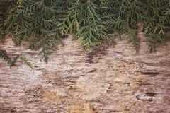 Arborvitae κλάδων Στοκ Φωτογραφία