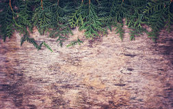 Arborvitae κλάδων Στοκ εικόνα με δικαίωμα ελεύθερης χρήσης