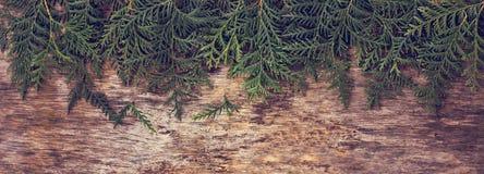 Arborvitae κλάδων Στοκ Εικόνα