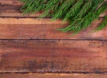 Arborvitae κλαδάκι στους πίνακες Στοκ εικόνα με δικαίωμα ελεύθερης χρήσης