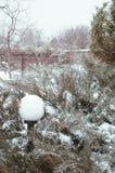 Arborvitae στο χιόνι και τον πάγο Στοκ Φωτογραφίες