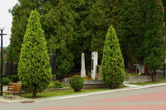 Arborvitae trees Royalty Free Stock Images