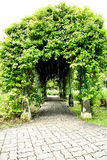 Arbour. A curved arbour built from foliage plants and iron structure in a public park Stock Image