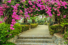 Arbour of flower. The beautiful arbour of Bougainvillea in the garden Royalty Free Stock Photo