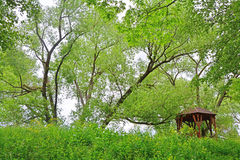 An arbour under high tree in Pereslavl-Zalessky city. An arbour under high tree in Dendrology garden of S. F. Kharitonov in Pereslavl-Zalessky city, Yaroslavl Royalty Free Stock Photos