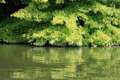 Arbre à feuilles caduques Image stock