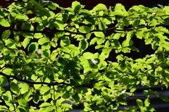 arbre feuilles caduques images stock image 2097944. Black Bedroom Furniture Sets. Home Design Ideas