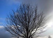 Arbre à feuilles caduques photographie stock