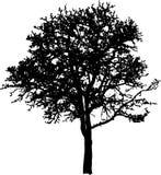 arbre à feuilles caduques Illustration Libre de Droits