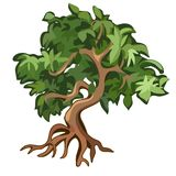 Arbre à feuilles caduques avec les racines exposées d'isolement sur le fond blanc Illustration de vecteur Photo stock
