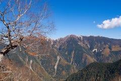 Arbre à feuilles caduques et la montagne à la distance Images libres de droits