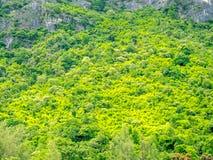 Arbre à feuilles persistantes sur la montagne Photos stock