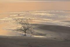 Arbre à la côte au coucher du soleil à la fin de l'été Photo libre de droits