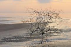 Arbre à la côte au coucher du soleil à la fin de l'été Image stock