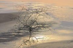 Arbre à la côte au coucher du soleil à la fin de l'été Images libres de droits