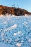 Arbre à la côte de lac Baikal Photo libre de droits