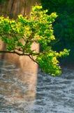 Arbre à la lumière du soleil brumeuse Images libres de droits