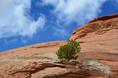 Arbre à la roche Image libre de droits