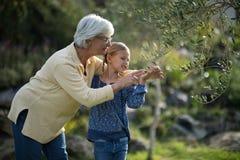 Arbre émouvant de petite-fille et de grand-mère dans le jardin Photographie stock