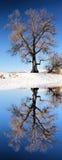 Arbre énorme à côté de lac d'hiver photographie stock libre de droits