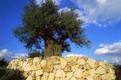 arbre Image stock