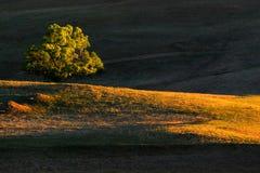 arbre Image libre de droits