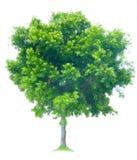 arbre Photographie stock libre de droits