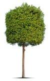 arbre Photo stock