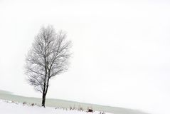 arbre Photos stock