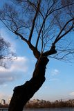 arbre Images stock