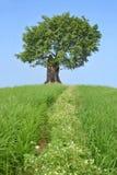 arbre Photo libre de droits