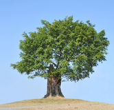 arbre Images stock