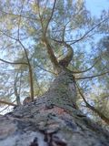 Arbre Photo stock