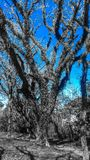 Arbre Photographie stock