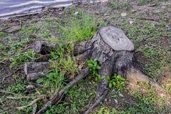Arbre abandonné Image stock