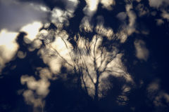 Arbre abstrait Photographie stock