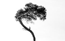 Arbre abstrait Image stock
