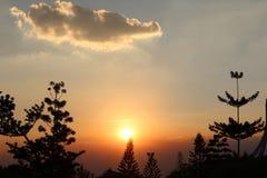 Arbre abstrait d'arbre et de branche sur le coucher du soleil, fond de lumière du soleil Photographie stock libre de droits