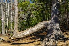 arbre abstrait de branchement Photos libres de droits