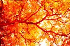 Arbre abstrait, foyer mou, fond avec l'arbre rose d'abrégé sur filtre de couleur, foyer mou, fond avec le filtre de couleur Photos libres de droits