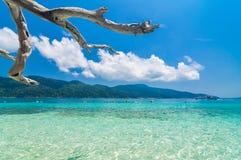 Arbre accrochant au-dessus de la plage Photographie stock libre de droits